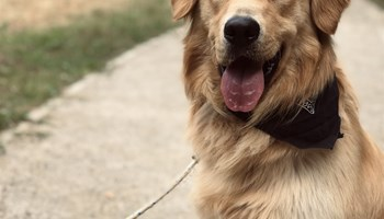 Čuvanje, šetanje i prijevoz  pasa